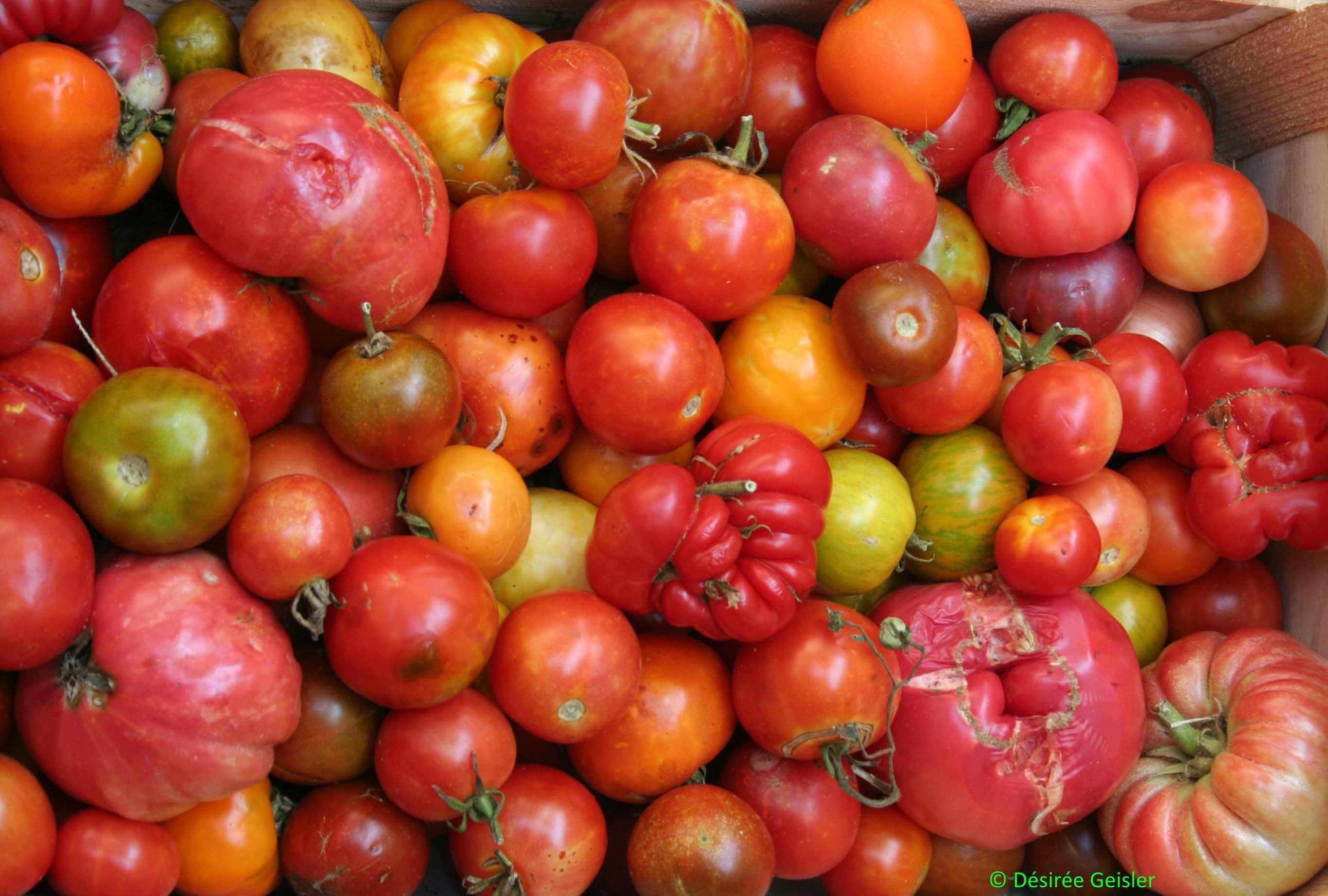 Tomatenbild